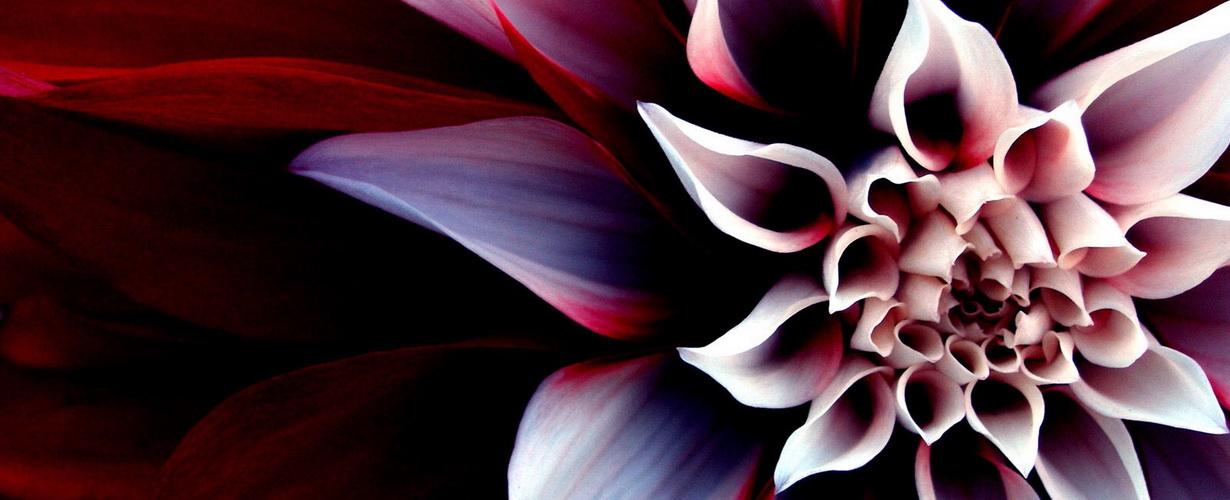 рисование, вдохновленное природой: цветы-мандалы